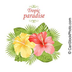 Beautiful Colorful Hibiscus Flowers Blossom and Tropical Leaves