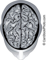Human brain top view - Illustration body part vector, Human...