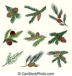 illustration., branches, vecteur, conifère, ensemble, cones.
