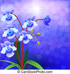 Bush Orchid violet on a luminous background