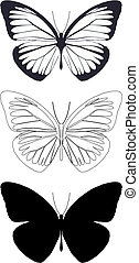 Illustration butterfly in vector