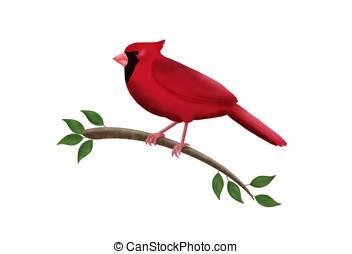 cardinal bird - illustration, cardinal bird perched on tree ...