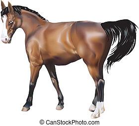 illustration, cheval
