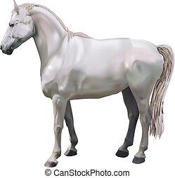 illustration, chevaux