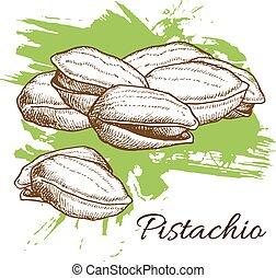 illustration., cobrança, mão, pistachos, vetorial, desenhado, gravado