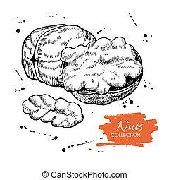 illustration., cobrança, mão, vetorial, desenhado, noz, gravado