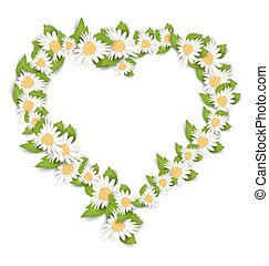 Daisy Flowers in Form Heart Isolated on White Background