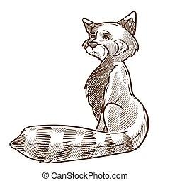 illustration, dessiné, vue, main, côté, raton laveur, croquis, animal