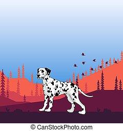 Illustration. Dog pedigree (Dalmatian) on the hunt, cartoon.