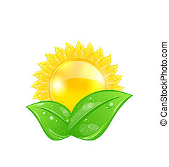Illustration eco friendly icon with sun and green leaves, isolated on white background - vector