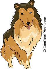 Collie - Illustration Featuring a Collie