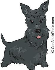 Scottish Terrier - Illustration Featuring a Scottish Terrier