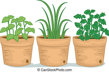 Potted Herbs - Illustration Featuring Potted Herbs