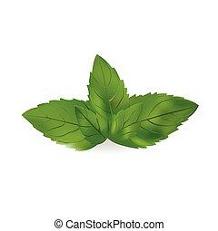 illustration., feuilles, isolé, réaliste, vecteur, fond, ...