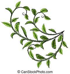 illustration., feuilles, vecteur, arrière-plan vert, blanc