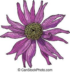 illustration., flower., mano, vector, tinta, dibujado,...