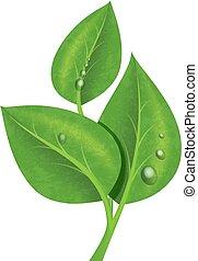 illustration., folhas, -, três, orvalho, realístico, vetorial, verde, branch., gotas