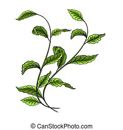illustration., folhas, vetorial, experiência verde, branca