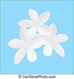 illustration Frangipani flower