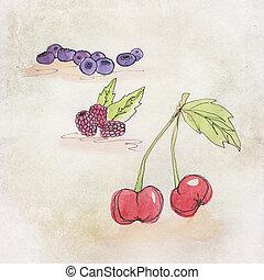 illustration, fruit, aquarelle