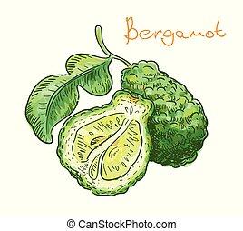 illustration., fruit, arrière-plan., vecteur, bergamote, blanc