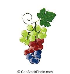 illustration grape colorful on white background