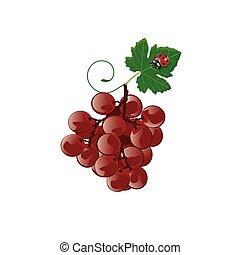 illustration. grape