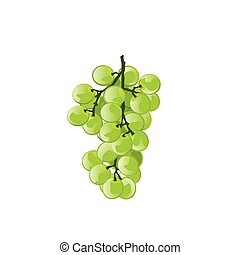 illustration grape green on white background