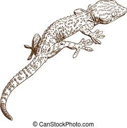 illustration, gravure, gecko