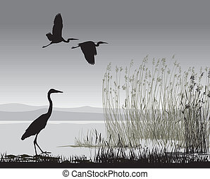vector illustration silhouettes herons on the lake