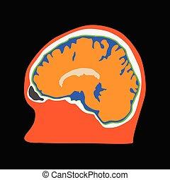 illustration, hjärna, mänsklig, sida se