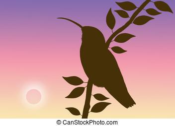 hummingbird silhouette - illustration, hummingbird...