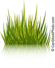 illustration., isolé, arrière-plan., vecteur, blanc vert, herbe