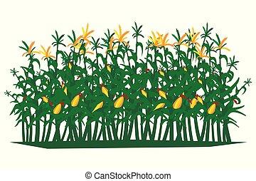 illustration., isolated., kukurydziane pole, wektor, tło, biały