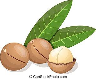 illustration., isolerat, vektor, white., det leafs, macadamia