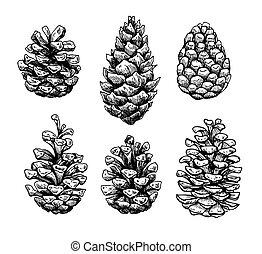 illustration., isolieren, vektor, kiefer, botanik, kegel, hand, gezeichnet, set.