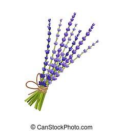 illustration, lavender., blanc, arrière-plan., bouquet, vecteur, bleu