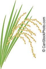 illustration., liście, tło., wektor, biały ryż, spikelet