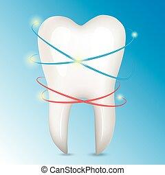 illustration., mänsklig, tand