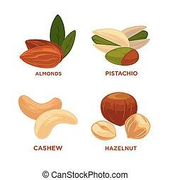 illustration., maduro, noz, nozes, vetorial, sementes, set.