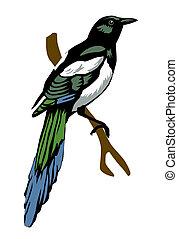 illustration magpie on white backgr