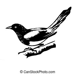 illustration magpie on white backg