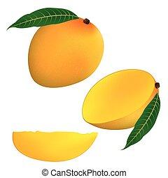 illustration mango