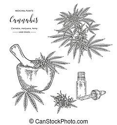 illustration., monde médical, indica, vecteur, cosmétique, ...