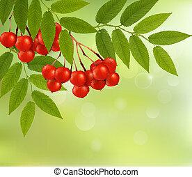 illustration., natura, foglie, vettore, sfondo verde, fresco, rowan.