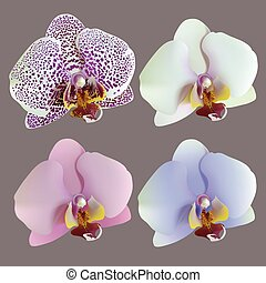 Illustration of 4 isolated flowers of orchids lilac, blue, white, pink