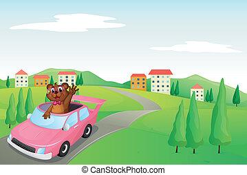 baby cub in a car