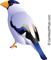 black headed white bird