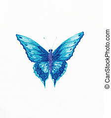 illustration of a  blue butterfly, white background.