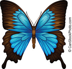 Blue Mountain Swallowtail - Illustration of a Blue Mountain...